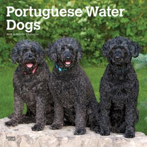Portuguese Water Dogs 2019 12 x 12 Inch Monthly Square Wall Calendar