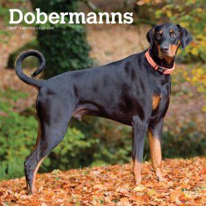 Dobermanns International Edition 2019 12 x 12 Inch Monthly Square Wall Calendar
