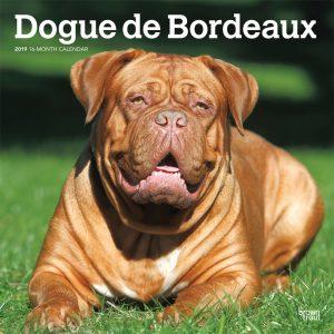 Dogue de Bordeaux 2019 12 x 12 Inch Monthly Square Wall Calendar