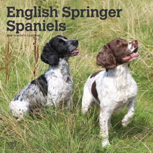 English Springer Spaniels International Edition 2019 12 x 12 Inch Monthly Square Wall Calendar