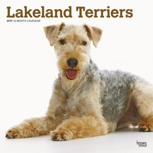 Lakeland Terriers 2019 12 x 12 Inch Monthly Square Wall Calendar