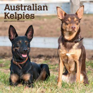 Australian Kelpies 2019 12 x 12 Inch Monthly Square Wall Calendar